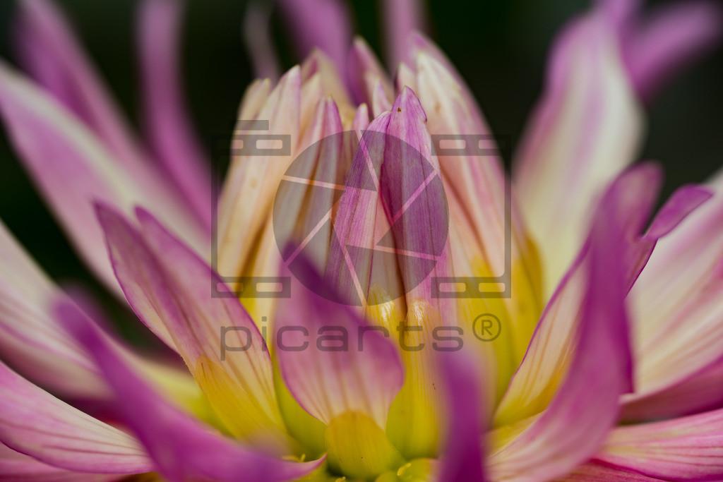 _DSC7298_Pictrs
