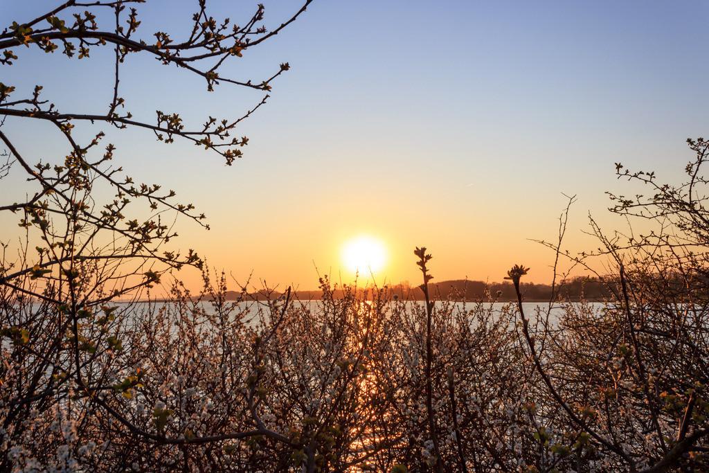 Stubbe an der Schlei   Sonnenaufgang in Stubbe