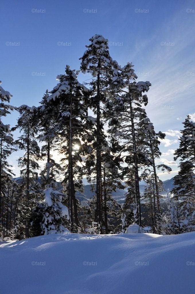 Dobr-Rosst-Ant-Feb13_141_1