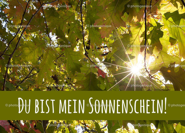 Postkarte Du bist mein Sonnenschein | ein Sonnenstern leuchtet durch buntes Herbstlaub mit dem Text Du bist mein Sonnenschein
