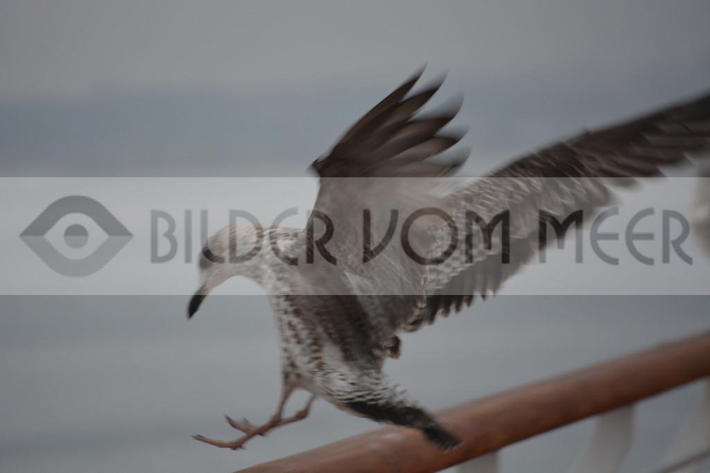 Fotoausstellung Meer Bilder    Möwen Achtung Landung