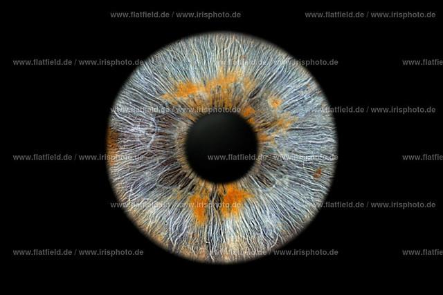 Iris-foto-Beispiel-556-last-ffm