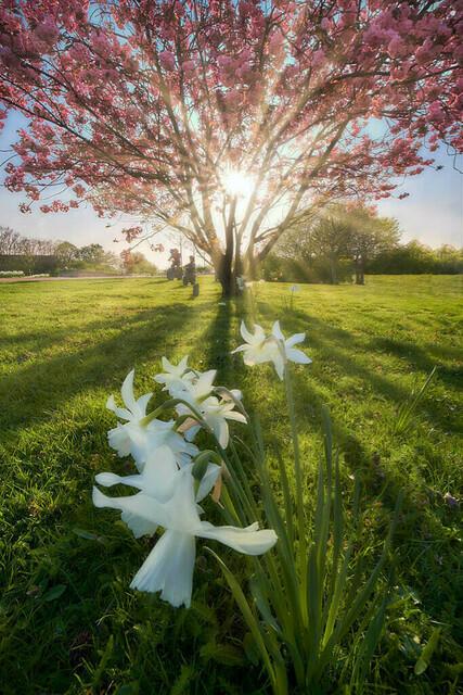 Frühlingserwachen | Wenn im April der Frühling erwacht, sind nahe gelegene Parks oft eine gutes Fotoziel.