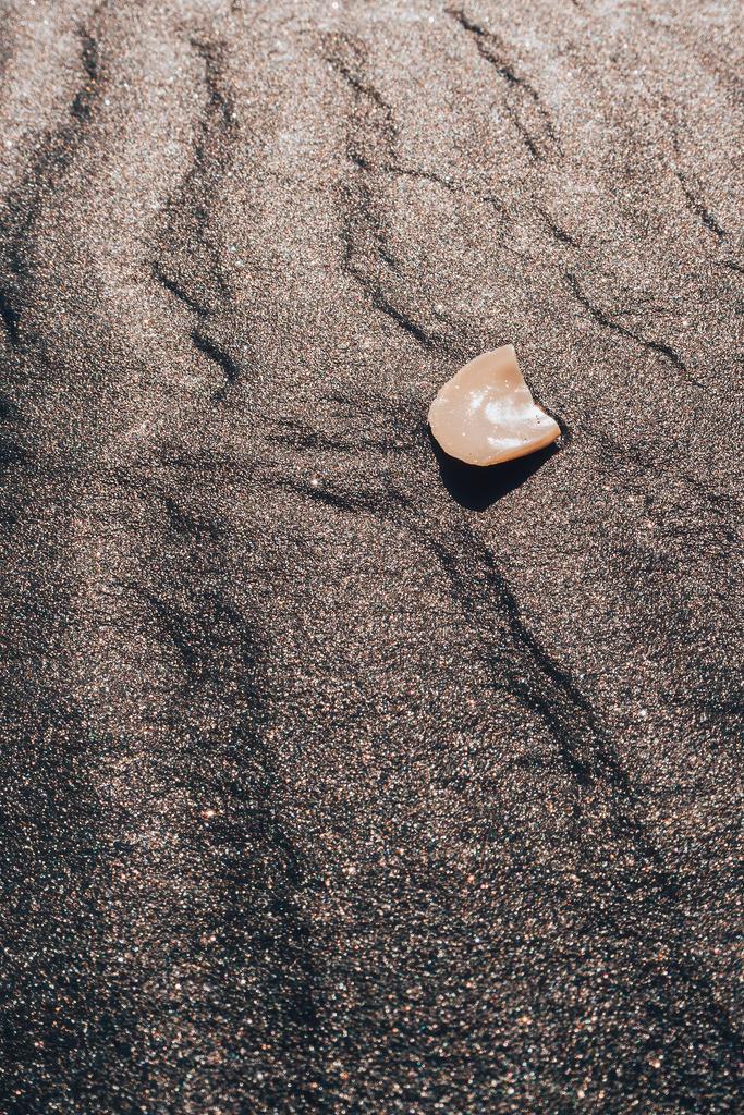 Muschel am Karioitahi Strand in Neuseeland | Muschel am Karioitahi Strand in Neuseeland