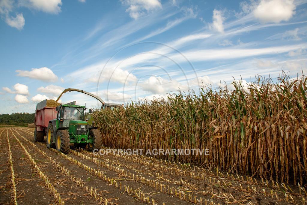 20080914-IMG_9020 | Silomais wird gehäckselt - AGRARFOTO Bilder aus der Landwirtschaft