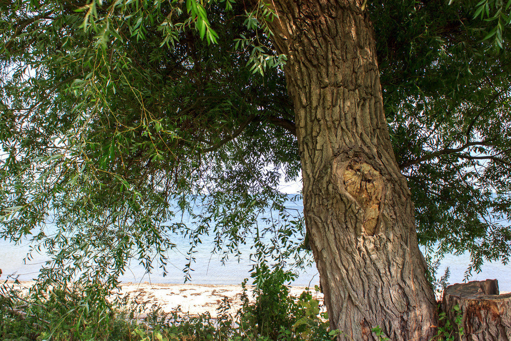 Strand in Norgaardholz   Baum am Strand in Norgaardholz