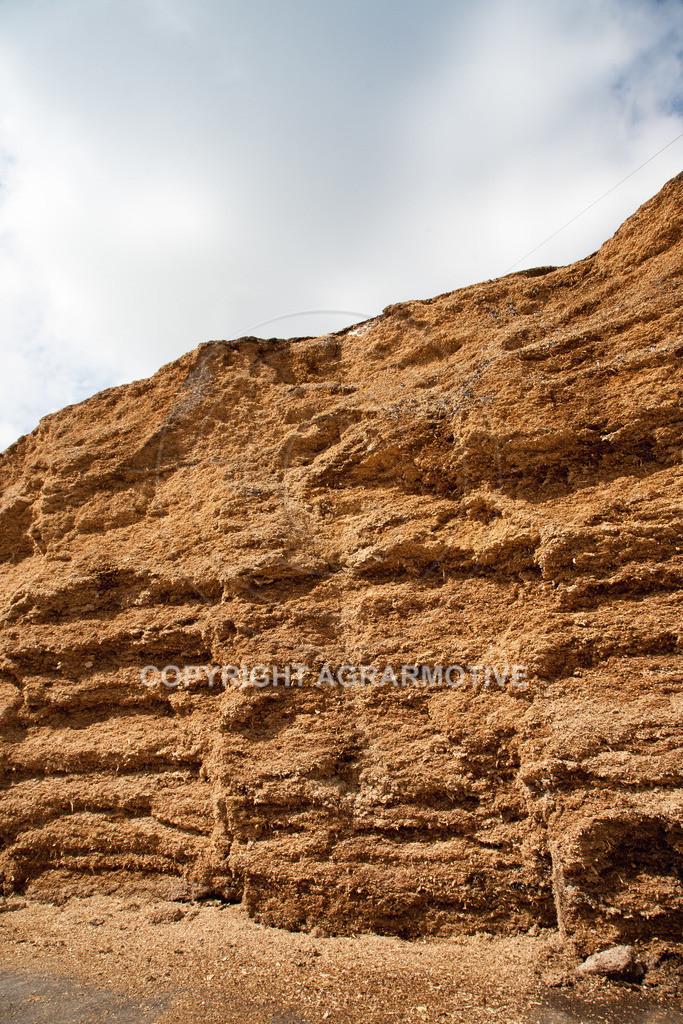 20090613-IMG_2971   Maissilage für Bioenergie - AGRARFOTOS