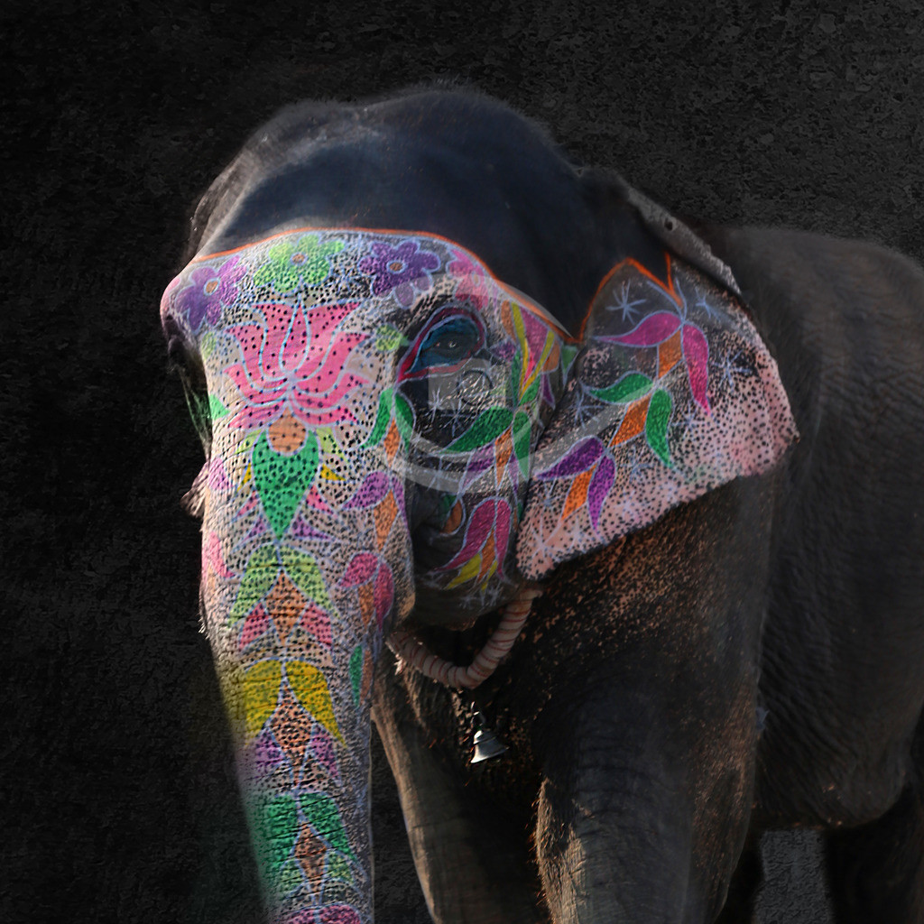 Portrait Elefant