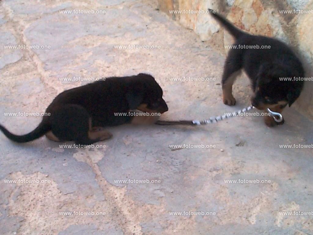 Leinenpflicht für Hunde | Leinenpflicht für Hunde