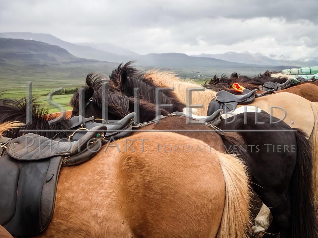 Vorbereitung | Reittour auf Island