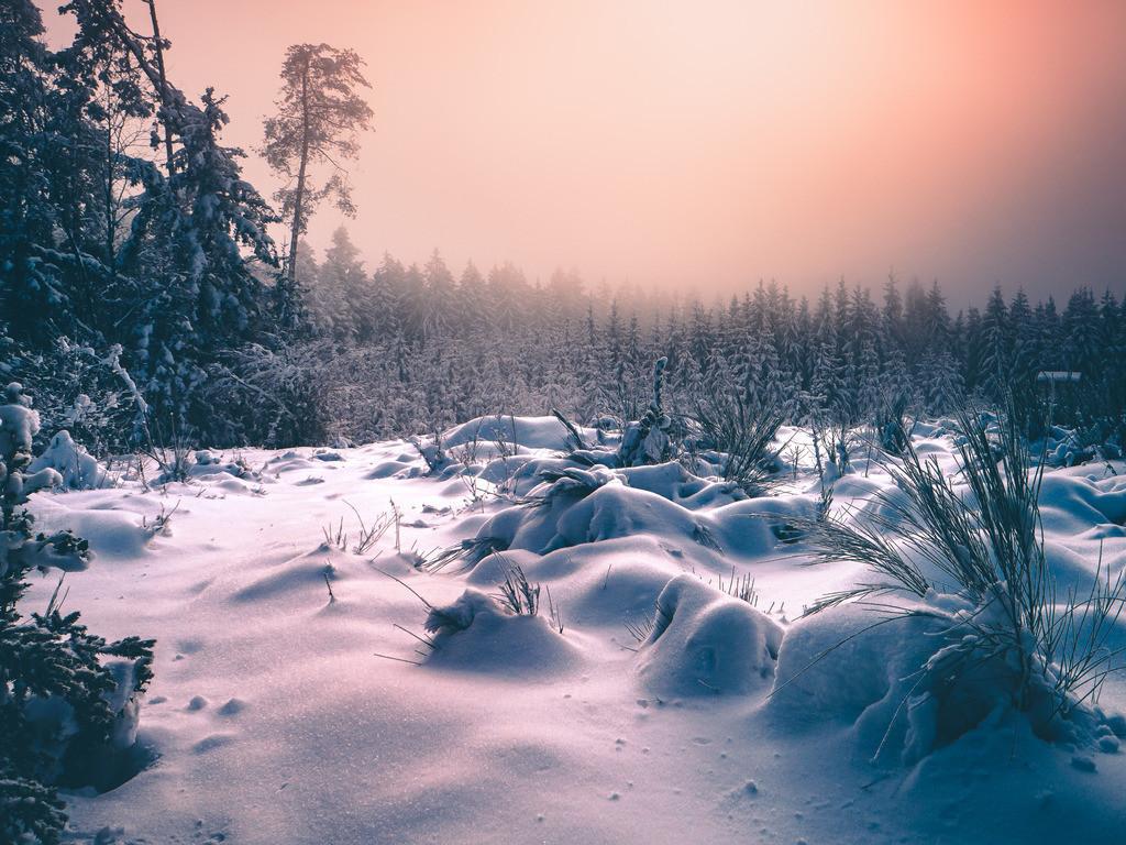 Wintertraum   Wintertraum im Schwarzwald