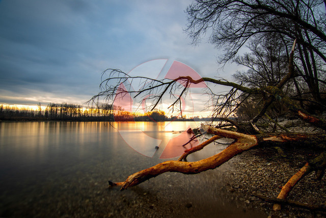 Sonnenuntergang an der Donau | Biberfraßspuren im Abendlicht an der Donau bei Langenstein