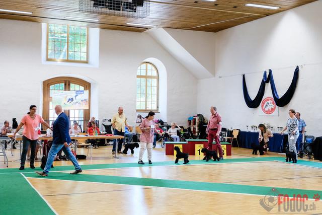 SCSP, CAC Clubschau | Alle Schweizerischer Club für Schnauzer und Pinscher  SCSP, CAC Clubschau  Salzhaus 3380 Wangen an der Aare.  23.06.2019 Foto: Leo Wyden