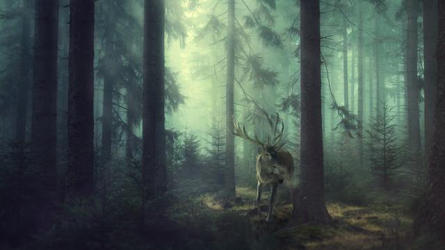 Hisch im Wald