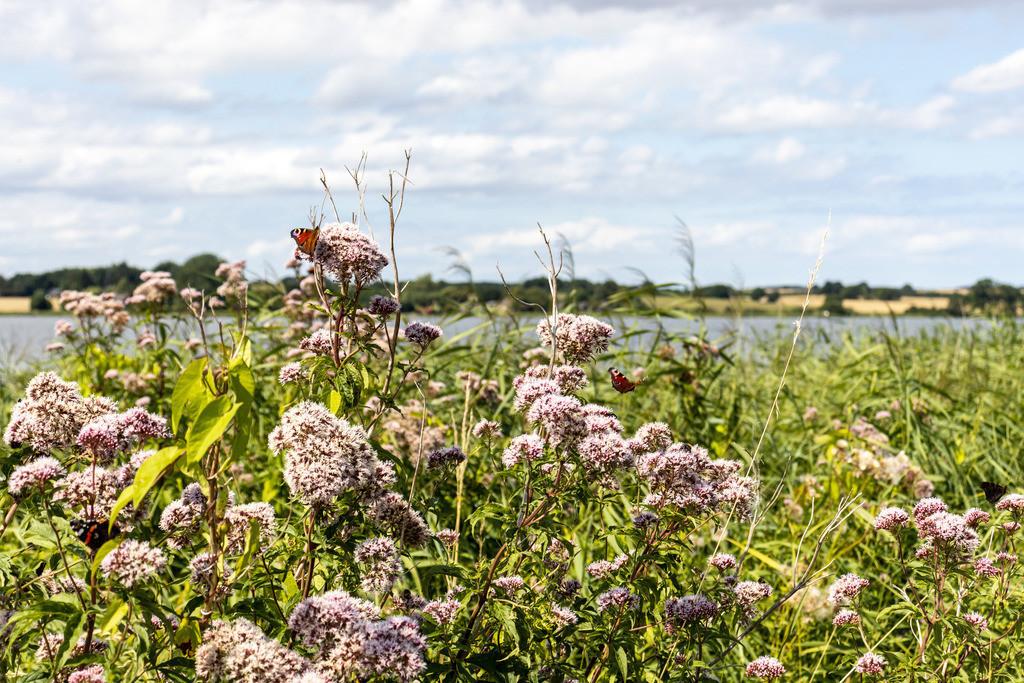 Sieseby an der Schlei | Schmetterlinge an der Schlei