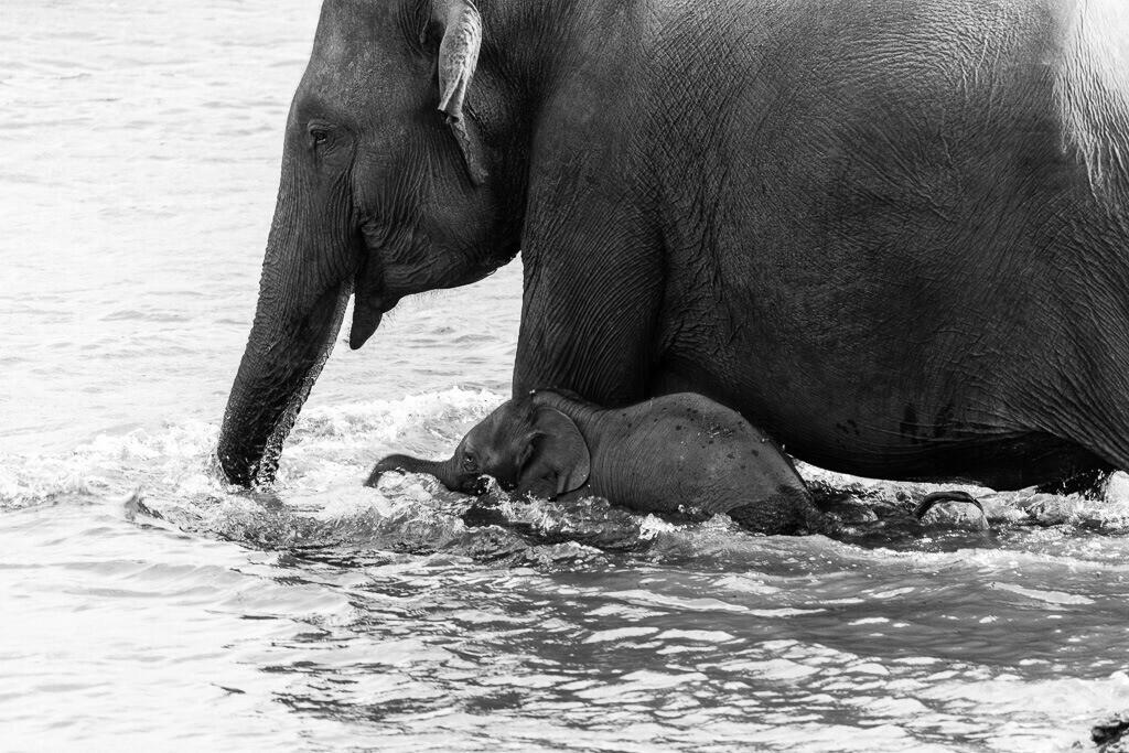 Elefant mit ihrem Baby