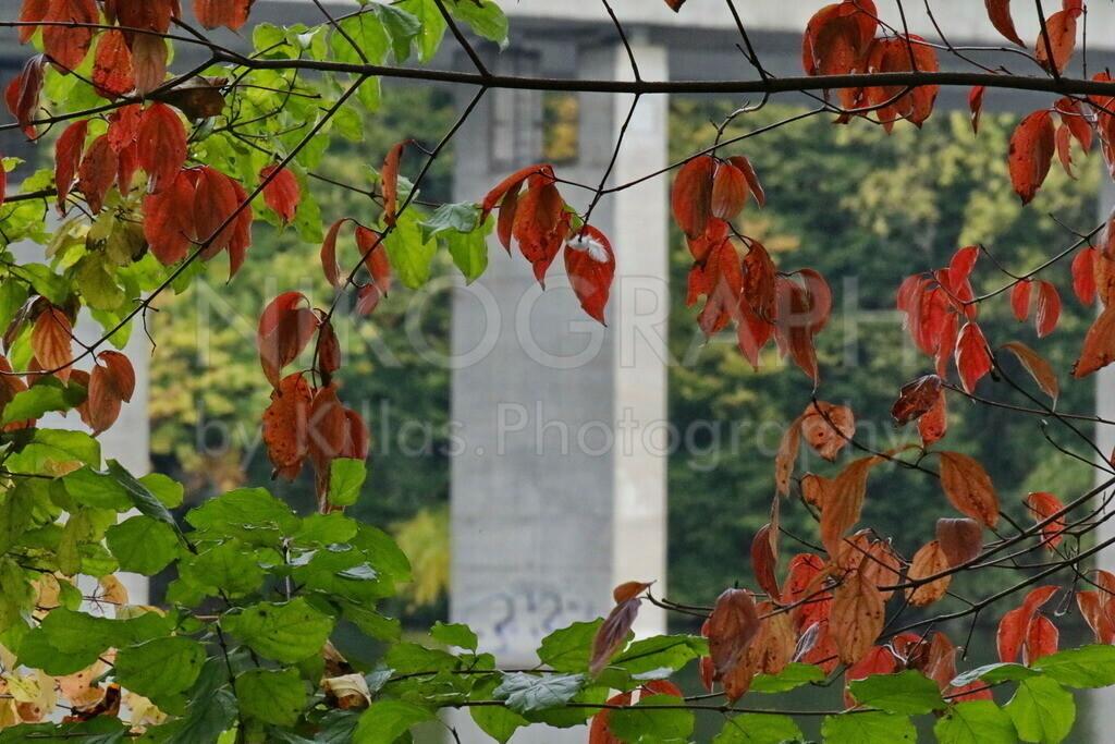 Herbstlaub | Herbstlich verfärbte Blätter vor dem Pfeiler der Autobahnbrücke am Seilersee in Iserlohn.